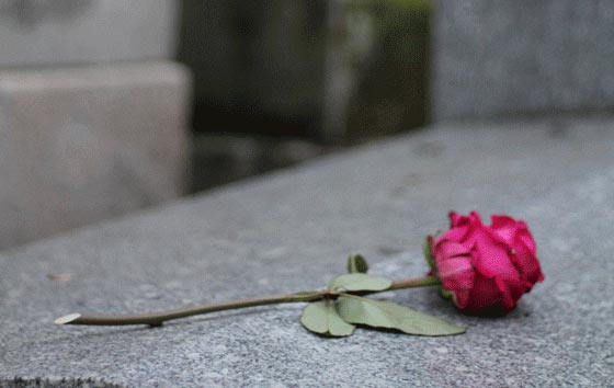 pink rose resting on top of a grave